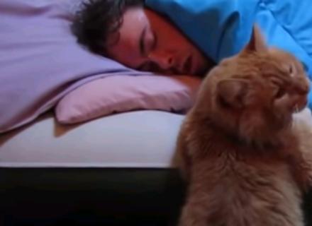 Відео дня: коти-будильники