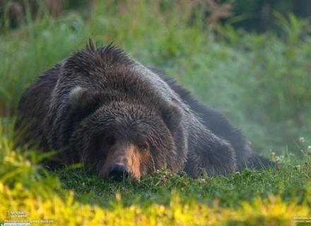 На Закарпатті прокинулися ведмеді
