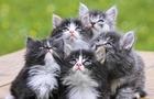 Як журналісти впливають на долю котів