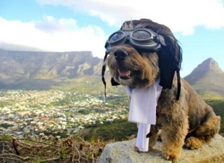 Що треба знати для подорожей з собакою