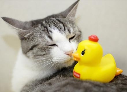 Вибираємо іграшки для котів
