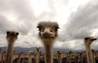 10 найпопулярніших міфів про тварин