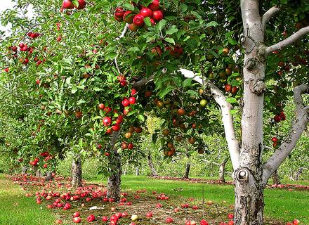 Влада Закарпаття вирішила виділити 3 млн. на сади