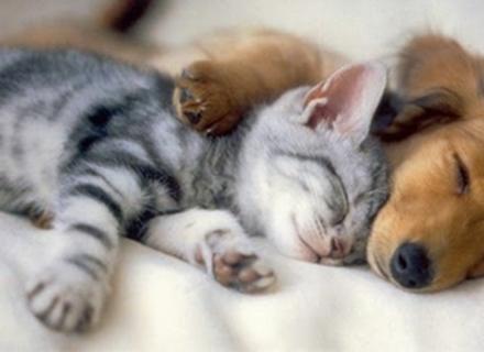 Українці найчастіше тримають вдома котів і собак