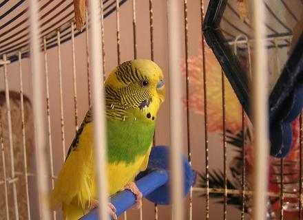 50 папуг згоріло у приватному гаражі на Закарпатті