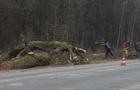 Під час буревію на Закарпатті дерева падали на автодороги в чотирьох районах