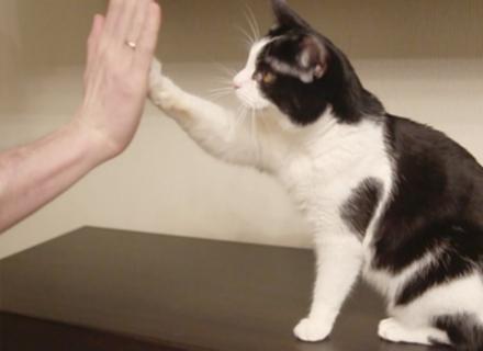 Ваш кіт праволапий чи ліволапий?