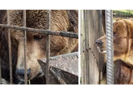 На Закарпаття у реабілітаційний центр ведмедів привезли ведмедя з Франківщини