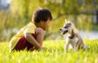 Що робити, якщо у сім'ї з'явилася домашня тварина