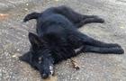 У Мукачеві собаки помирають у страшних конвульсіях (ВІДЕО)