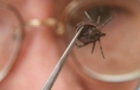 В Ужгороді вже 17 чоловік захворіли небезпечною хворобою Лайма, яку переносять кліщі