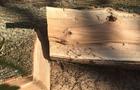 На Перечинщині двох чоловіків підозрюють у незаконній рубці дубу
