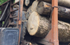 На Рахівщині правоохоронці виявили деревину, яку перевозили за підробленими документами