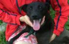 За програмою «Ужгород - гуманне місто» було стерилізовано 41 собаку та 27 котів