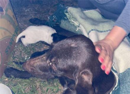 На Берегівщині чоловік побив собаку і кинув її у вигрібну яму помирати. У собаки було 7 цуценят (ФОТО)