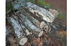 Патрульні впіймали п'яного чоловіка, який вирубував дерева у ботанічному саду Ужгородського університету