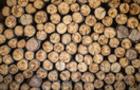 Москаль рекомендує заборонити продавати дрова на експорт
