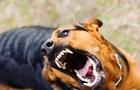 В Іршаві у собаки виявили сказ. Влада збирає спеціальну комісію