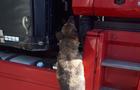 На Закарпатті службовий собака знайшов арсенал частин до автоматів АК-74