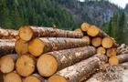 На Тячівщині дорогу хочуть перекривати лісоруби (ВІДЕО)