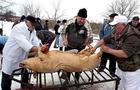 Попри протести захисників тварин: На Закарпатті знову проведуть фестиваль різників