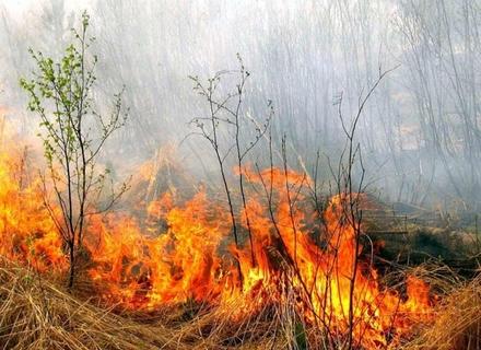 В Ужгороді 13-річна дівчина отруїлася димом паленої трави