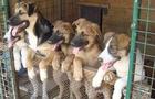 Історія одного притулку для бездомних собак  у Виноградові