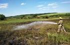 На Виноградівщині вигоріла полунична плантація
