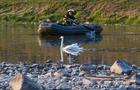 Як в Ужгороді рятувальники за лебедем ганялися (ФОТО)