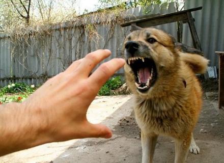 За два тижні цього року в Ужгороді від укусів собак постраждало 5 чоловік