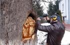 У Тячеві доброволець оживляє зрубані дерева