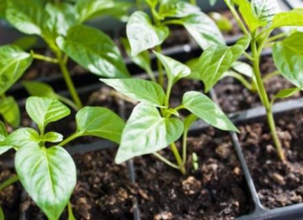 ТОП засобів захисту рослин для дачі
