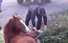 В Ужгороді рятувальники витягли з комунікаційної шахти коня
