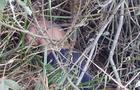 На Виноградівщині знову знайшли труп чоловіка