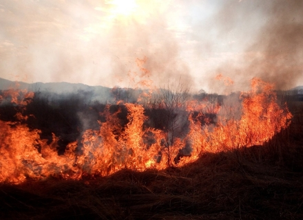 Рятувальники розповіли про пожежу в унікальній Долині нарцисів біля Хуста: вигоріло два гектари