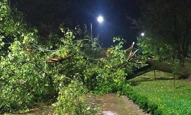 Буря над Хустщиною: Вирвані з корінням дерева, затоплені вулиці
