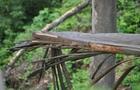 У Хусті двоє хуліганів зламали 15 дерев сакур. Вандалів знайшли