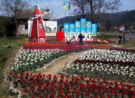 Замок, тюльпани та міст кохання: Як одне село на Закарпатті може стати прикладом успішного розвитку туризму