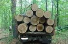 Прокуратура закінчила слідство стосовно двох закарпатців, які вирубували дерева у національному парку