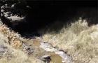 Екологічне лихо в Хусті: У потічок вилили отрутохімікати (ВІДЕО)