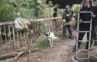 В Ужгороді рятувальники витягали собаку з колодязя