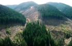 На Закарпатті створили інтернет-ресурс де реєструватимуть лісопорушення