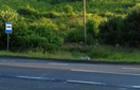 На трасі поблизу села Вовкове знайдено труп вовка
