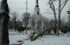 Стихія на Закарпатті: У Виноградові вітер повалив десятки дерев (ФОТО)