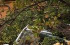 В Ужгороді древо впало на автомобіль і перекрило дорогу