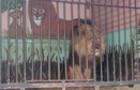 Пересувних зоопарків та цирків в Ужгороді більше не буде