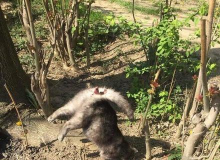 Ужгородський Шаріков: В Ужгороді невідомий душогуб жорстоко вбиває котів