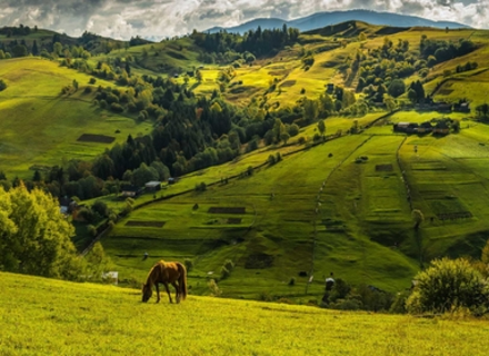 Від Ужгорода до перечинських Дубриничів - лісівники облаштовують новий туристичний маршрут