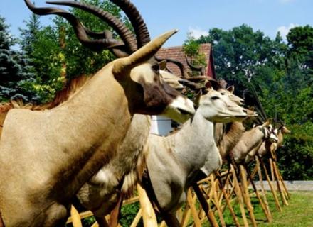 В урочищі «Великий ліс» пройшов міжнародний День мисливця