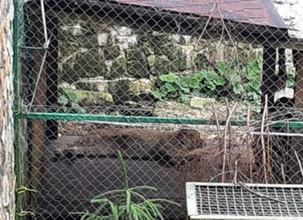 Реабілітаційний центр у Синевирі поповнився левеням
